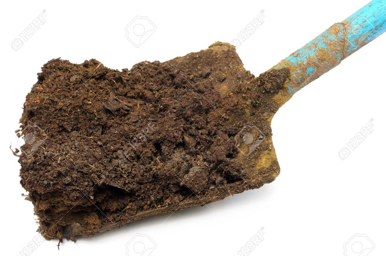 [Image: 25207866-cow-manure-on-a-shovel-over-white.jpg]