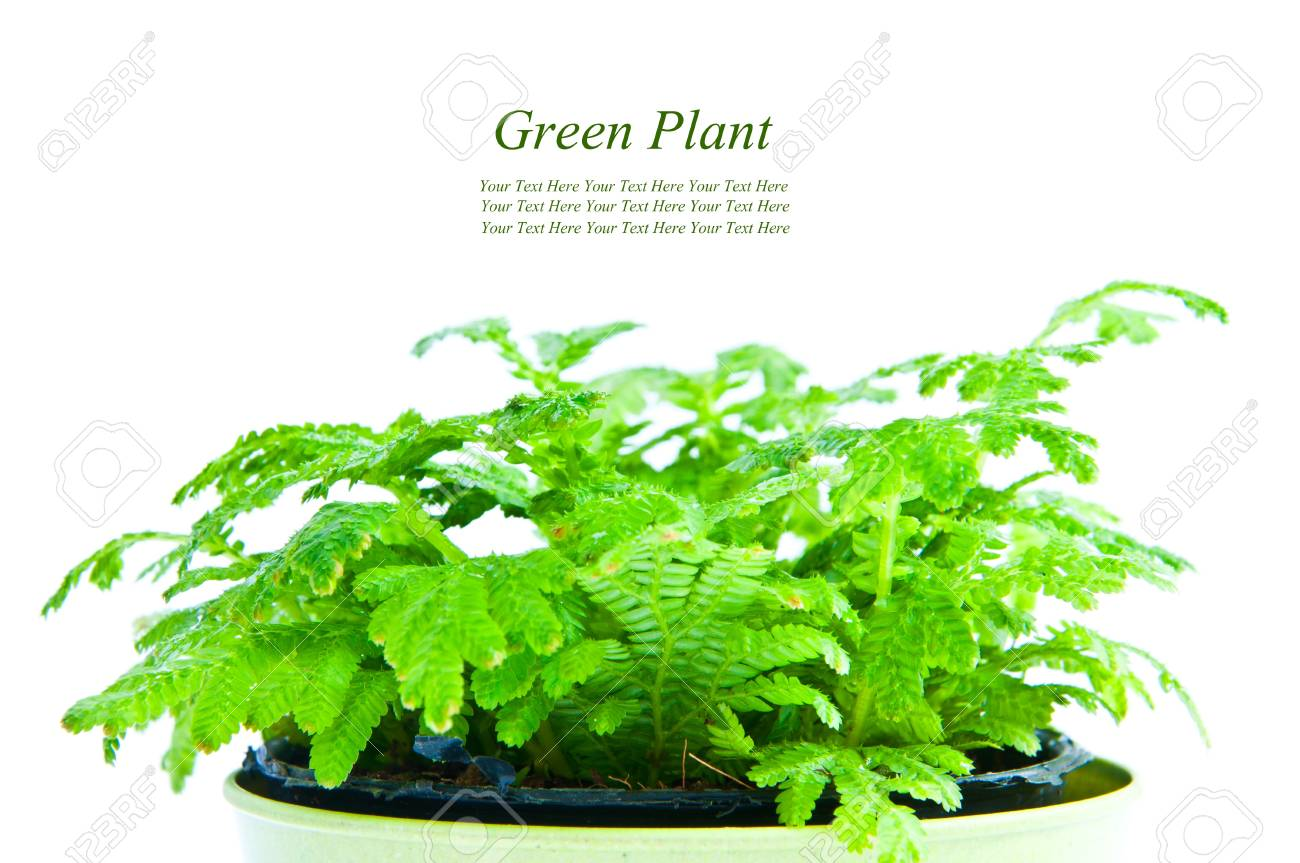 Young plant on the white backgrounds Stock Photo - 9152745