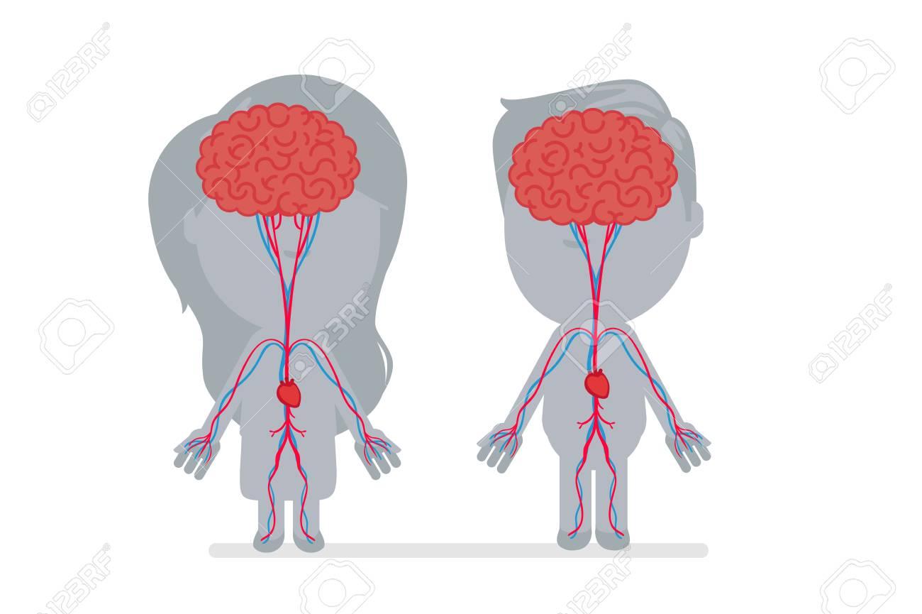 人体解剖学のベクトル イラスト ロイヤリティフリークリップアート