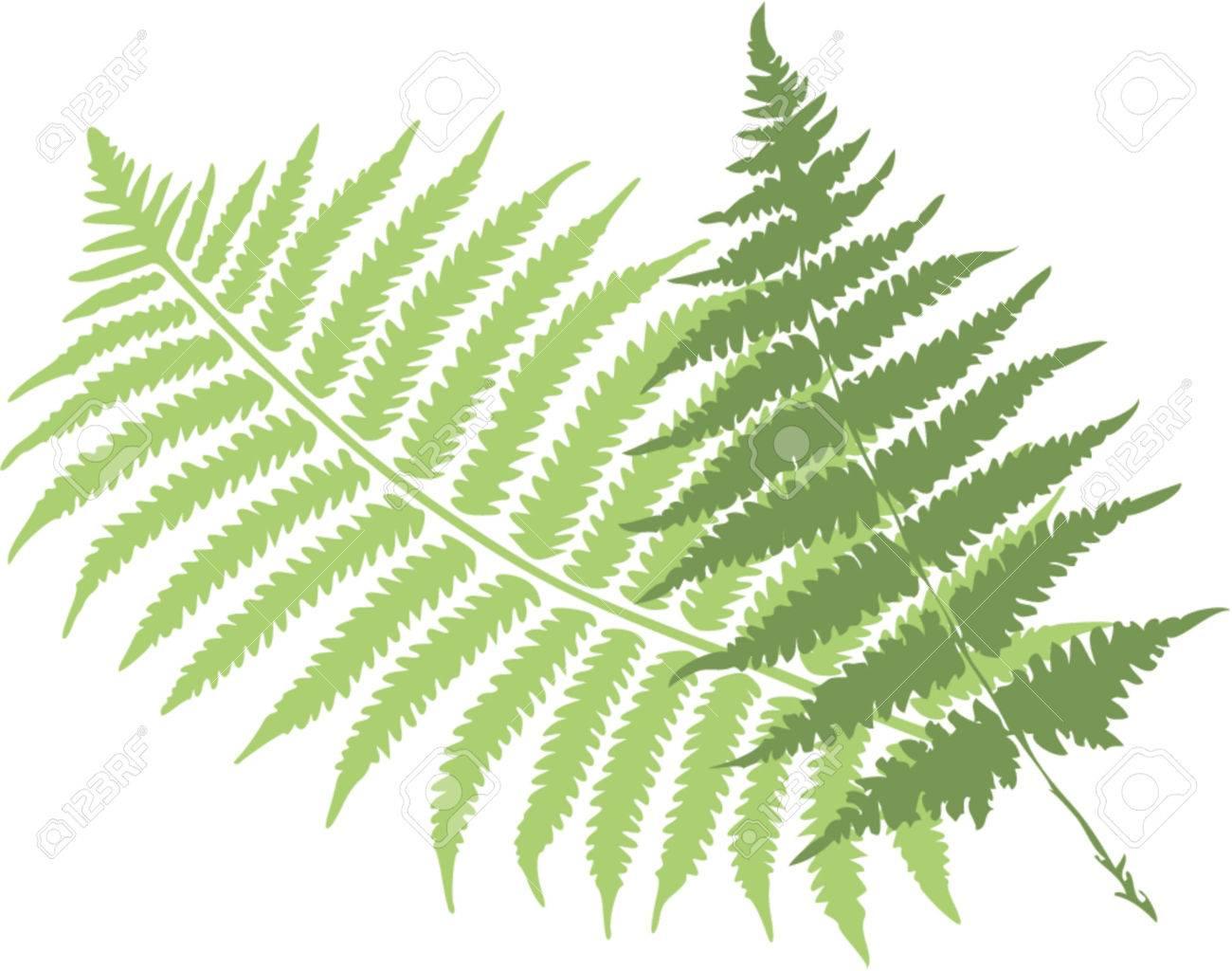 fern leaves Stock Vector - 1200399