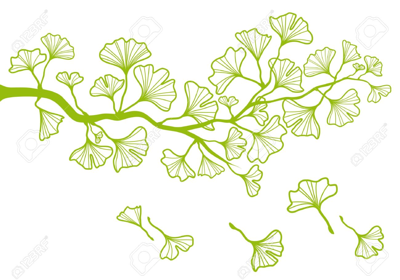 tree branch with leaves vector. ginkgo tree branch with green leaves stock vector - 14490915