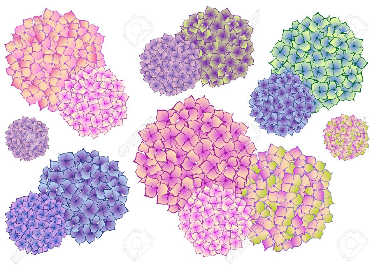 Ensemble De Fleurs D Hortensia Colores Des Elements De Dessin