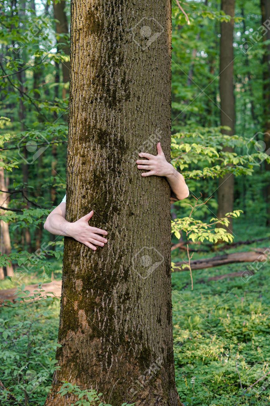 Tree hugging. Close-up of hands hugging tree - 159307991
