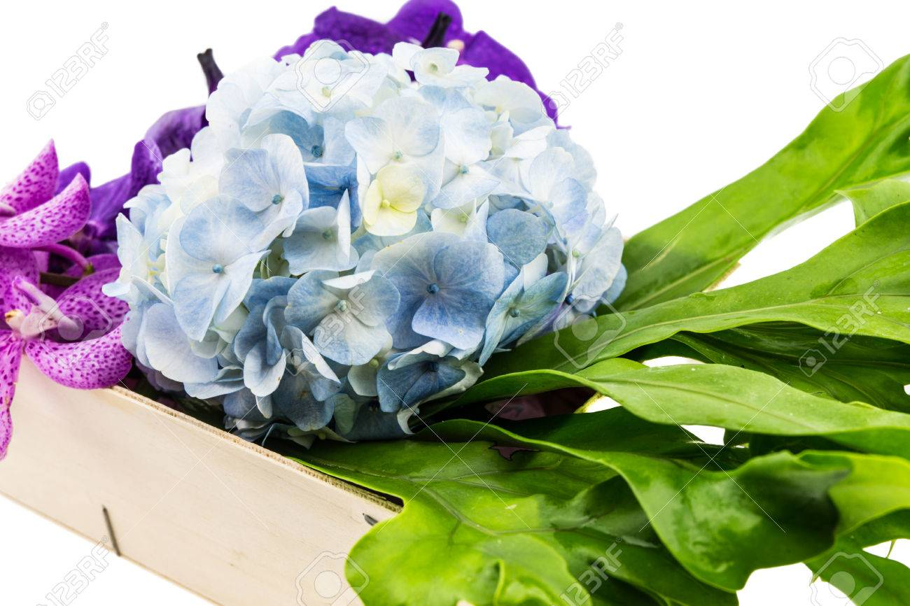 Light Blue Hydrangeapurple Orchid Flowers And Leaves In Wooden