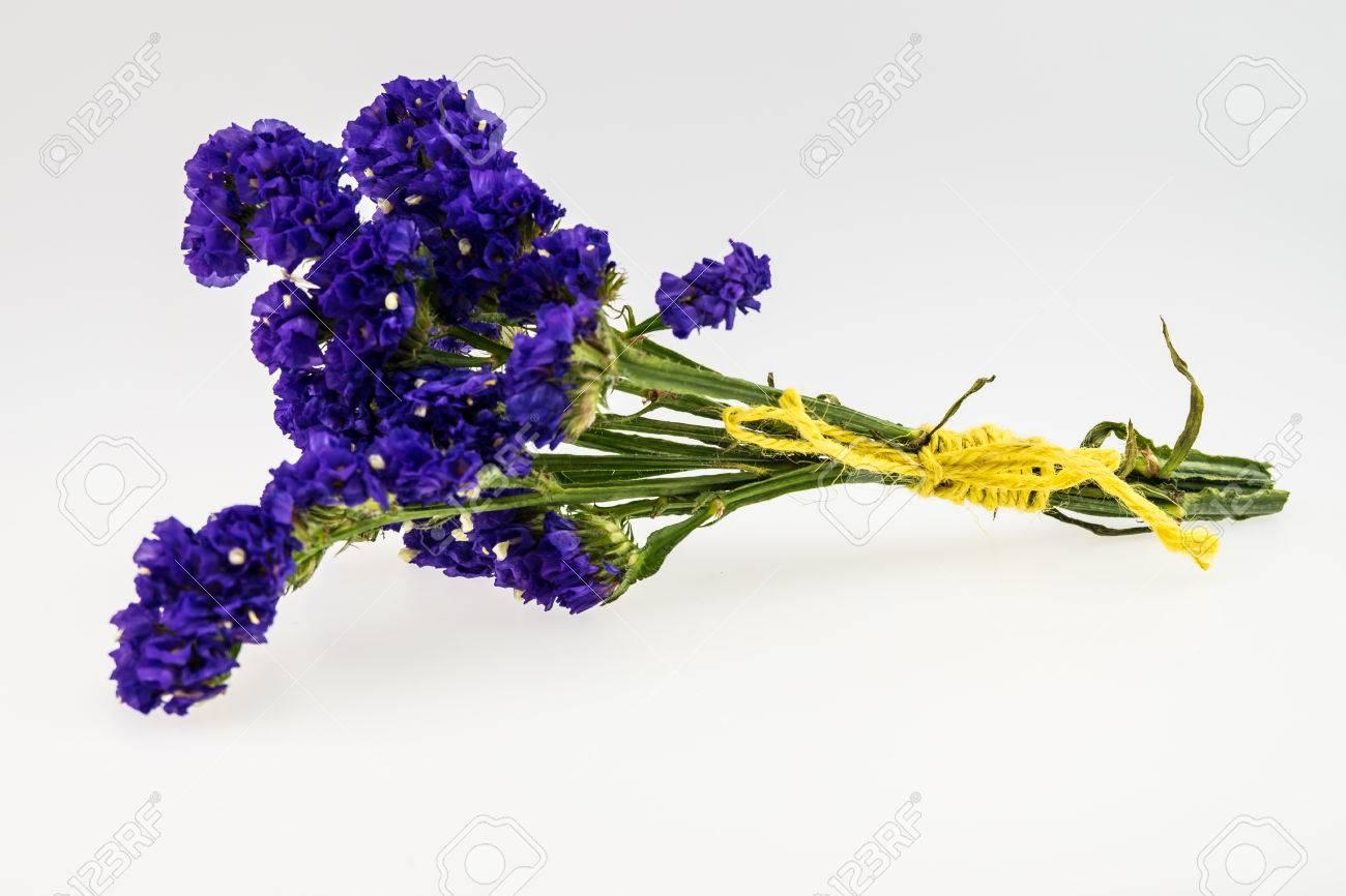 Statice flower isolated on white stock photo picture and royalty statice flower isolated on white stock photo 39226114 mightylinksfo Images