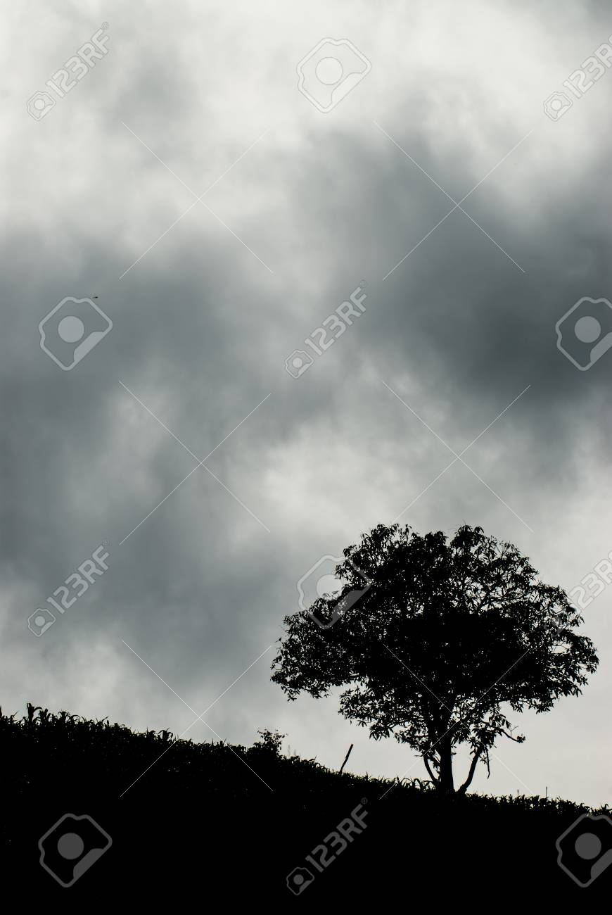 A mature old tree spreads its branches out on a country slope Stock Photo -  80572488