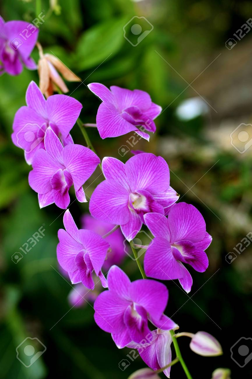 Orchid Flowers Beautiful Orchid Natural Flowers