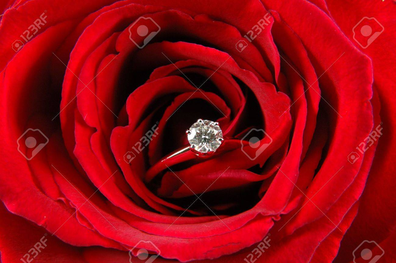 Close up of engagement ring in red rose Stock Photo - 598392