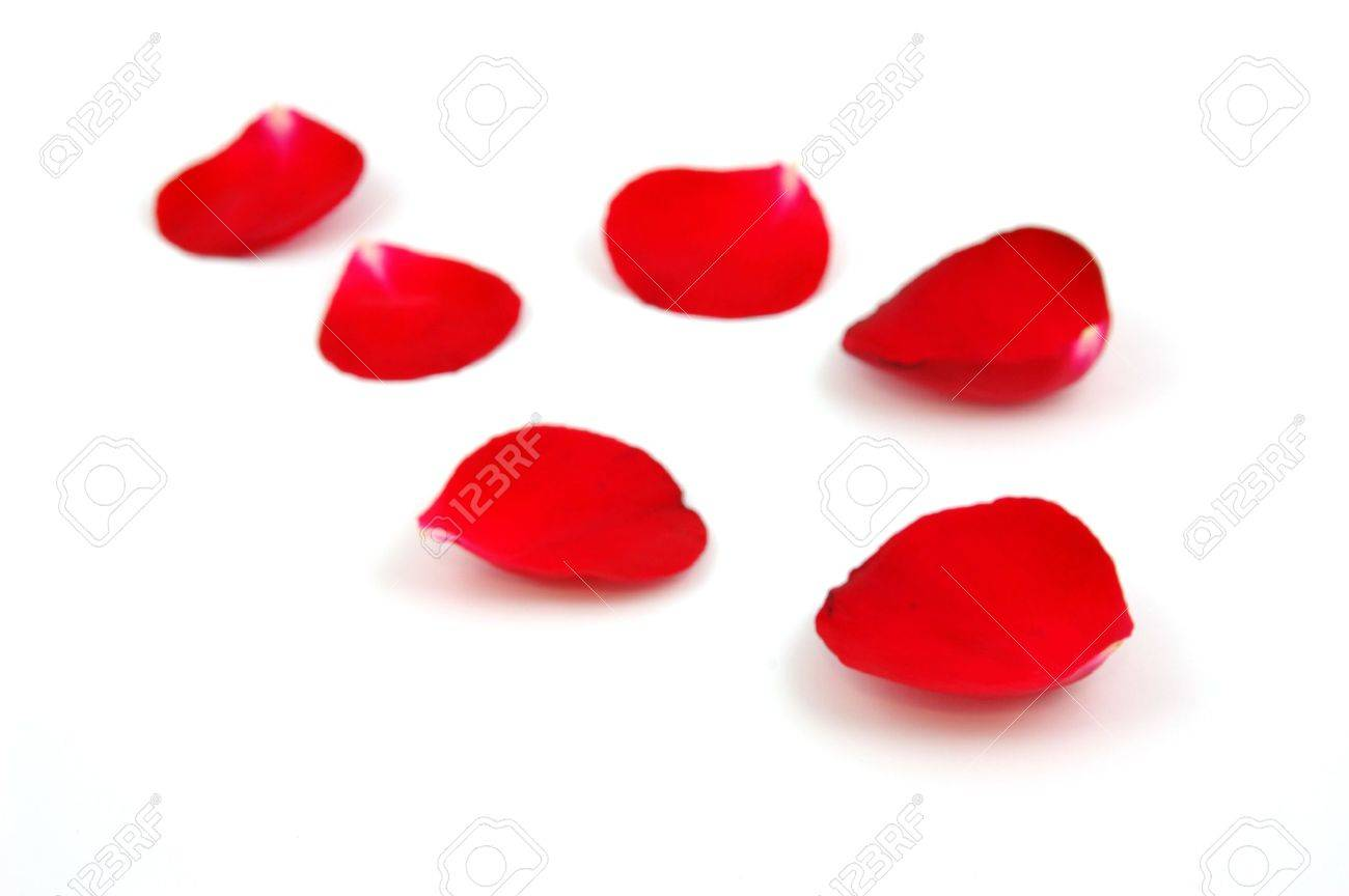 Red rose petals in isolated white Stock Photo - 598374