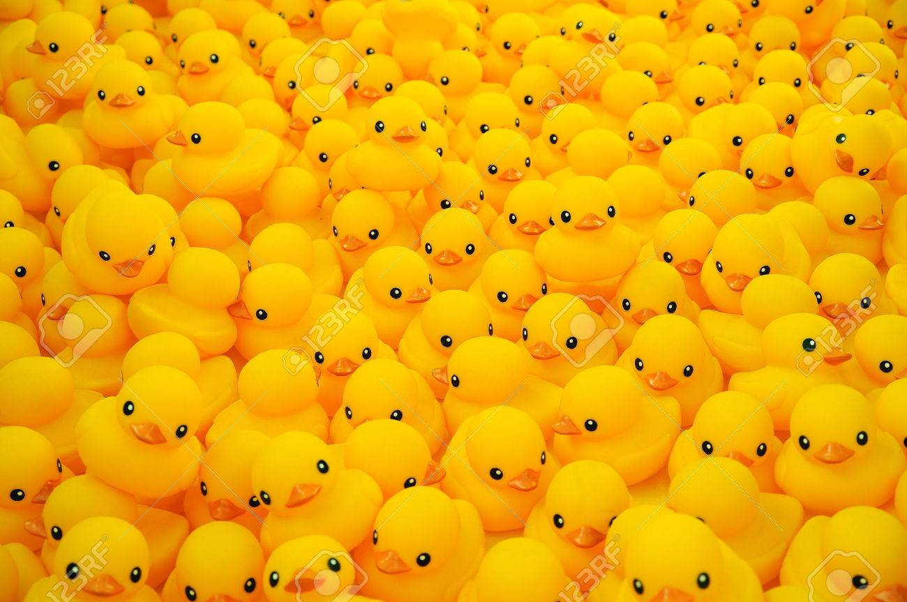 yellow duck stock photos u0026 pictures royalty free yellow duck