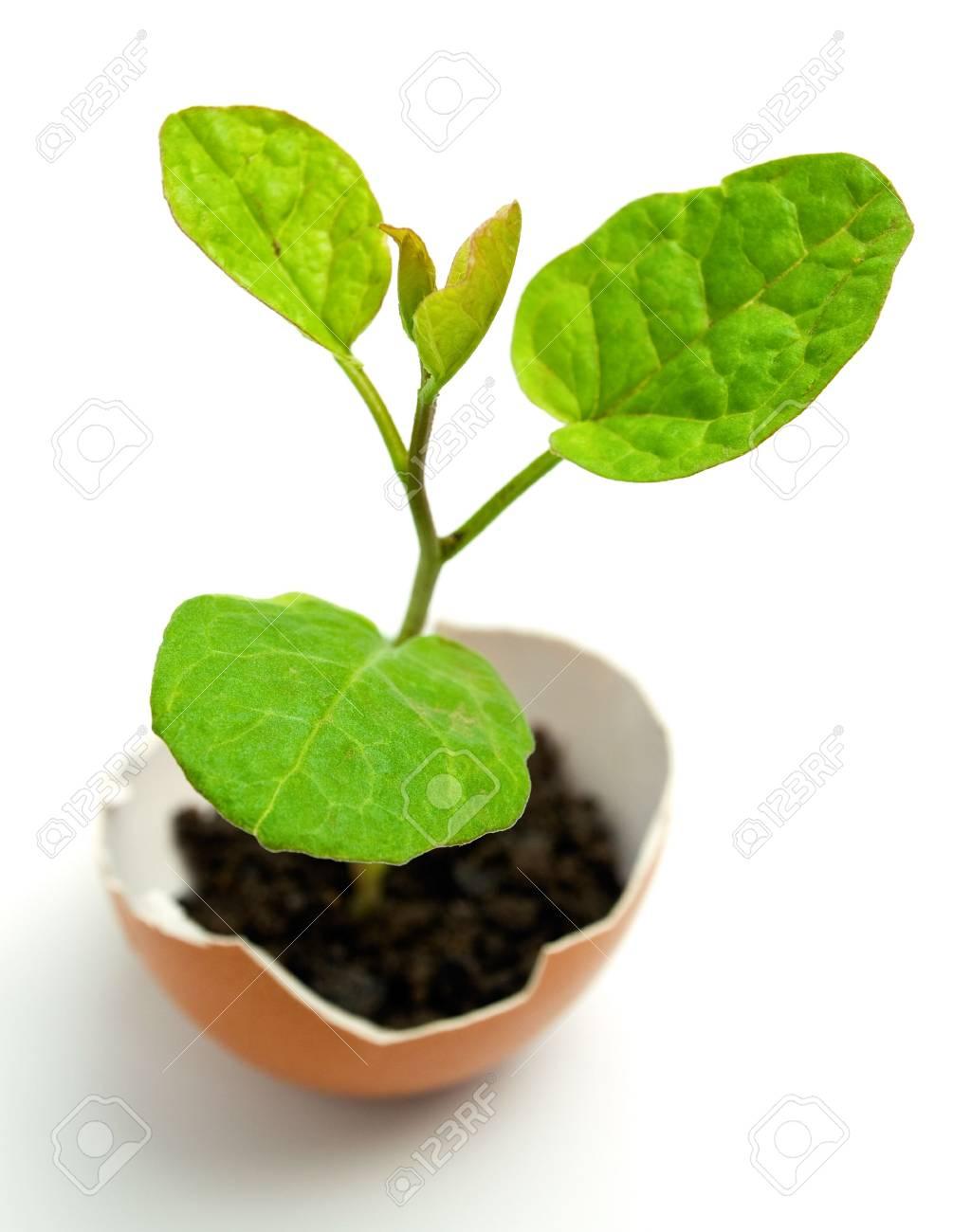 plant in egg Stock Photo - 4781064
