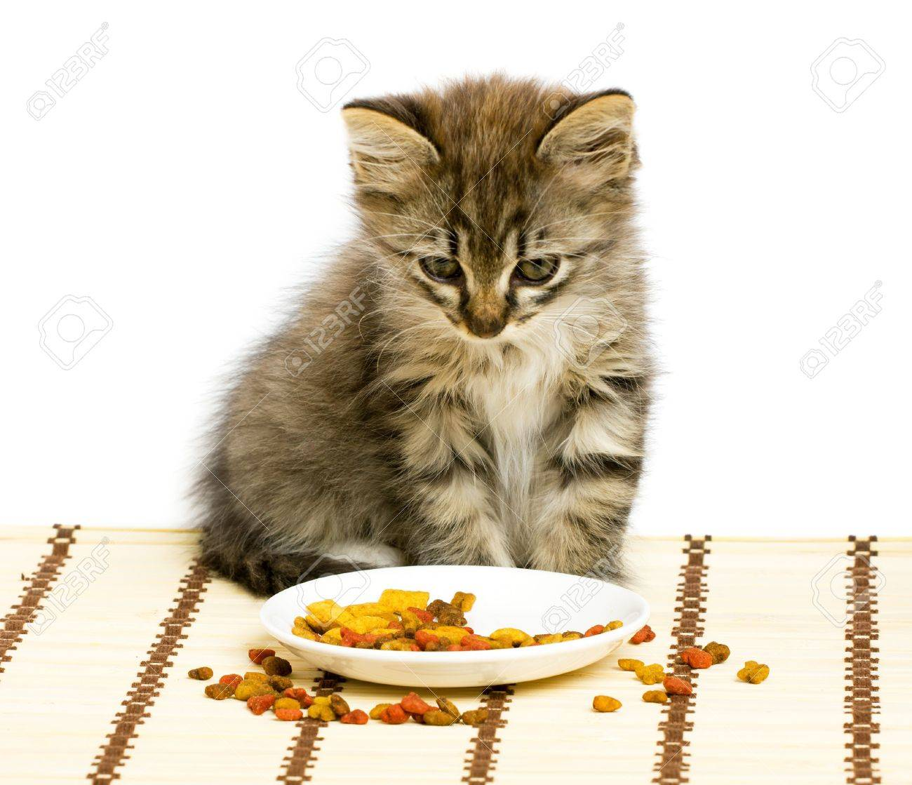 How Old Does A Kitten Have To Be Eat Dry Food All The Best Food