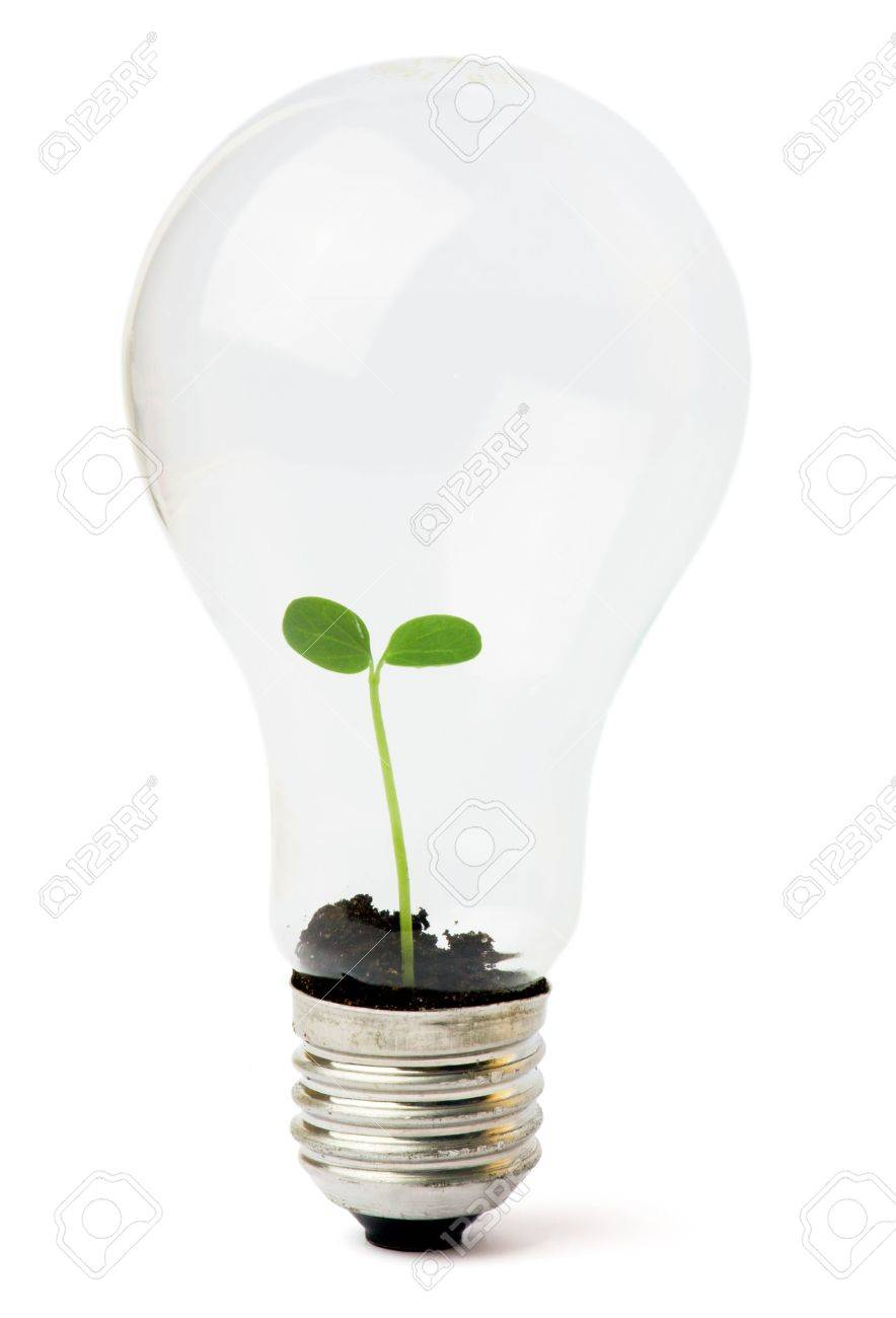 lightbulb with plant growing inside Stock Photo - 5613329