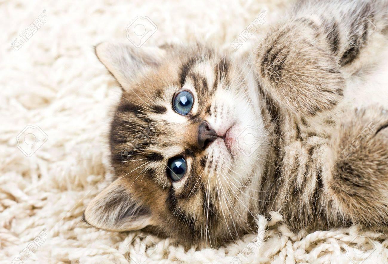 Funny kitten in carpet - 8033357