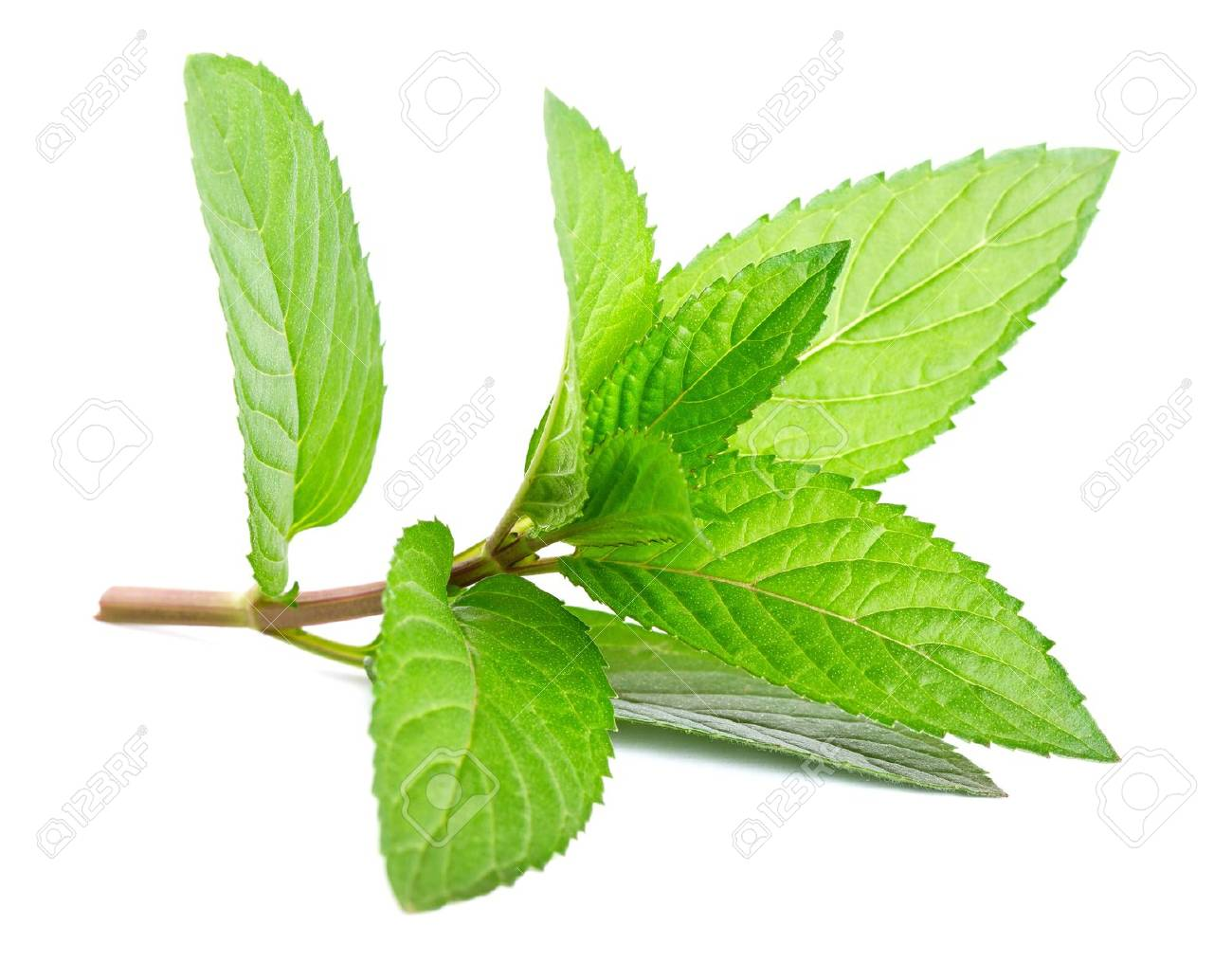 Fresh green mint isolated on white - 9724791