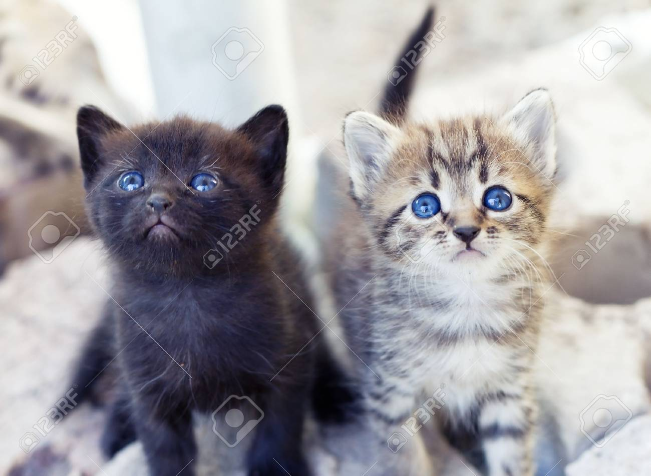 Kitten - 10223226