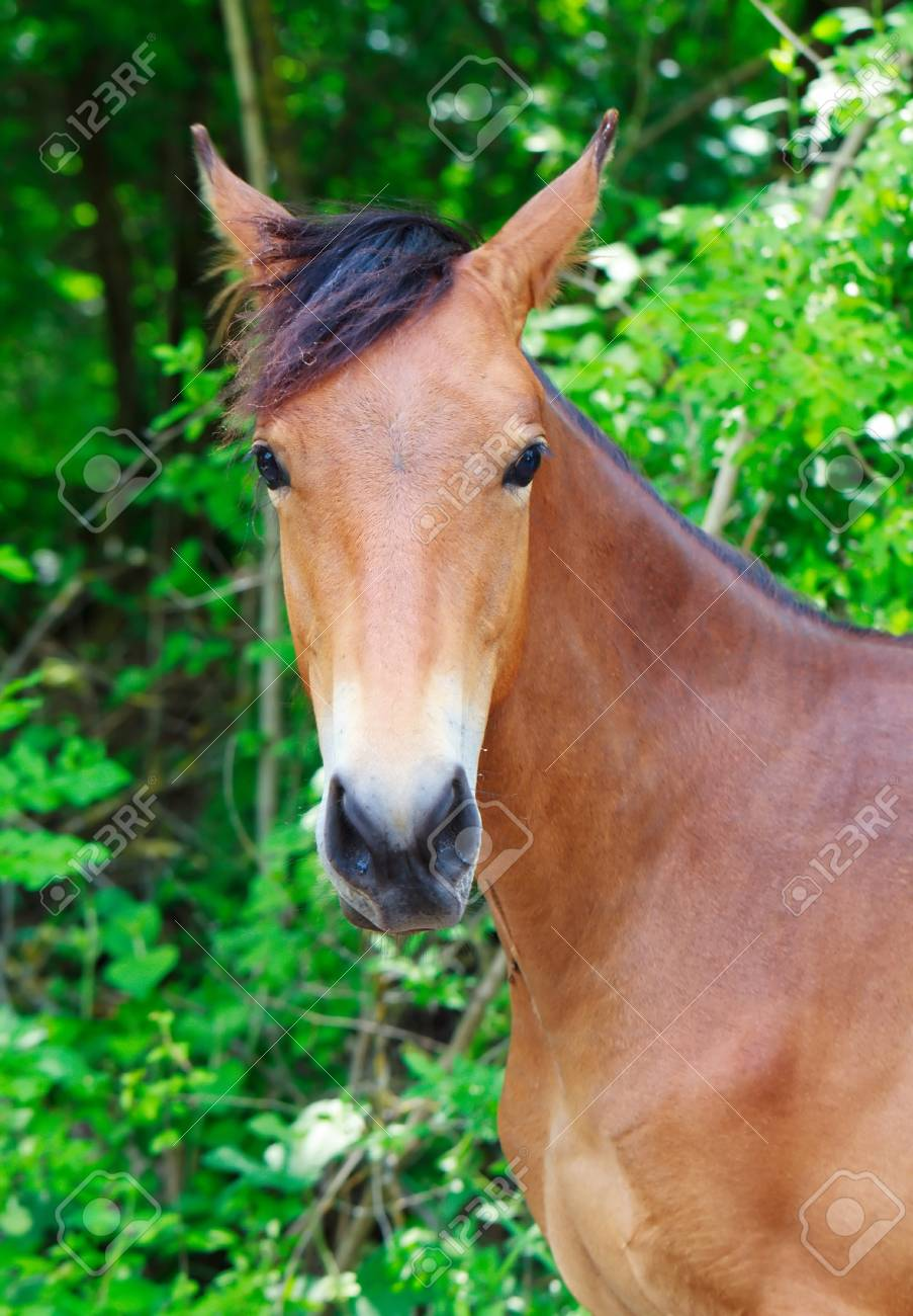 Portrait of a horse Stock Photo - 13796679
