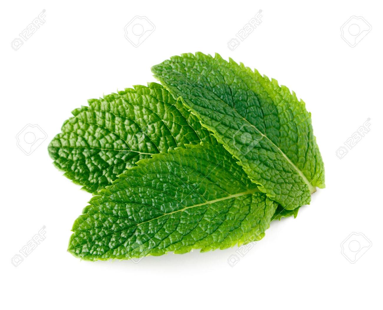 mint leaves isolated on white background - 60230138
