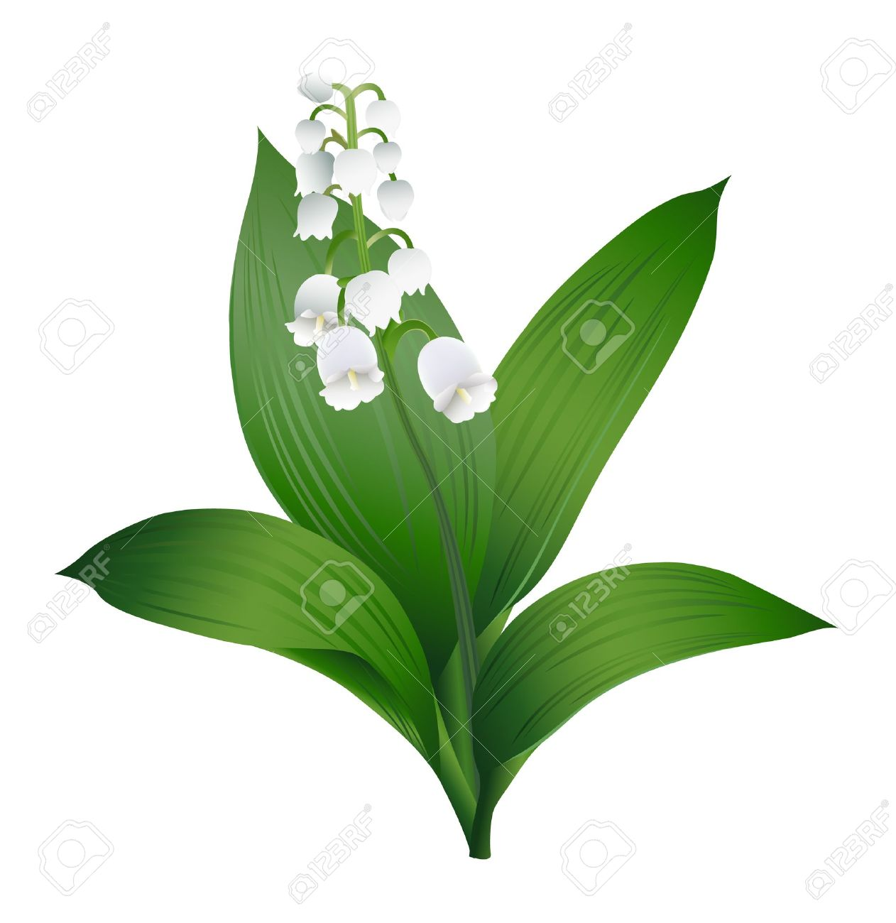 Lily of the Valley Stock Vector - 18517412