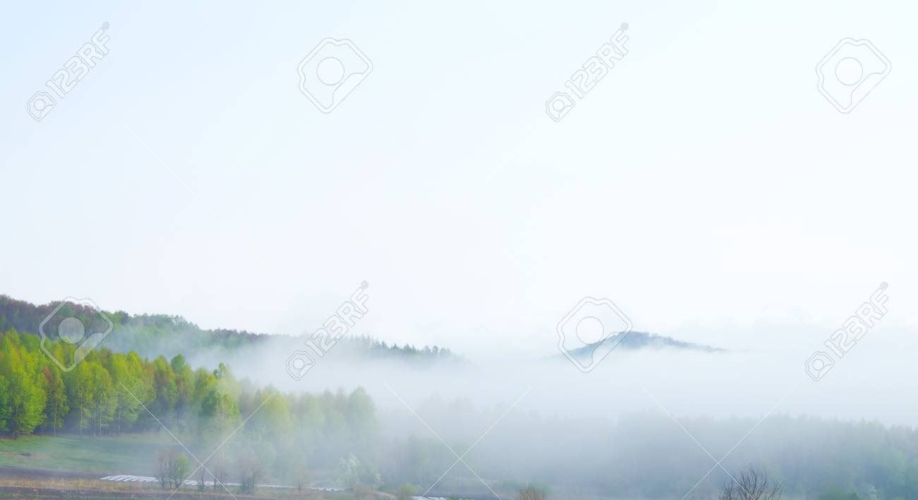 morning mist cover pine tree forest Stock Photo - 14319916