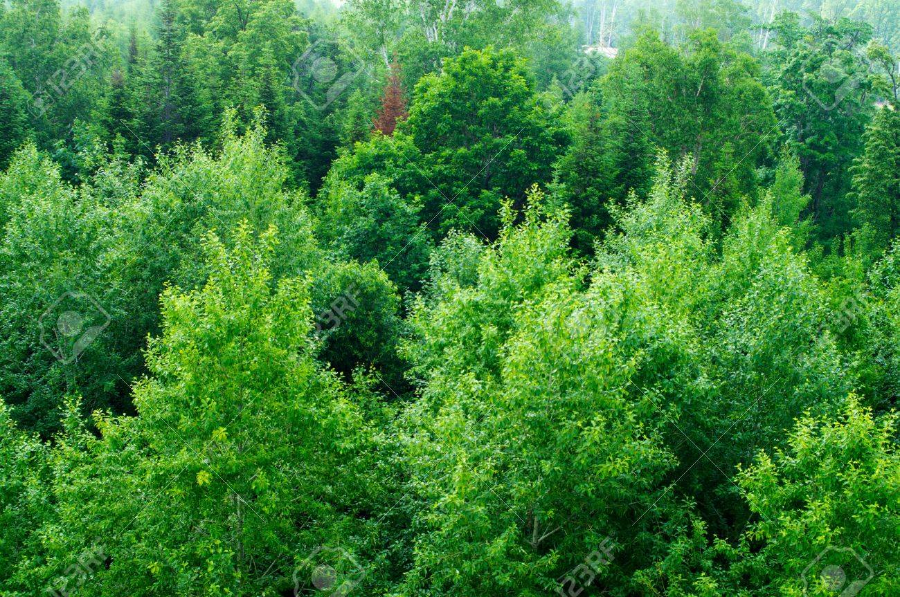 The thick forest the north temperate zone stock photo picture and the thick forest the north temperate zone stock photo 15386816 altavistaventures Image collections