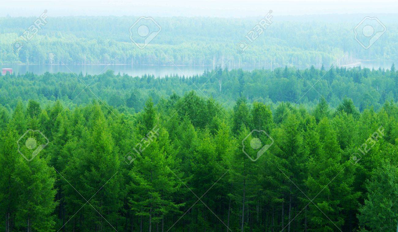 The thick forest the north temperate zone stock photo picture and stock photo the thick forest the north temperate zone altavistaventures Choice Image