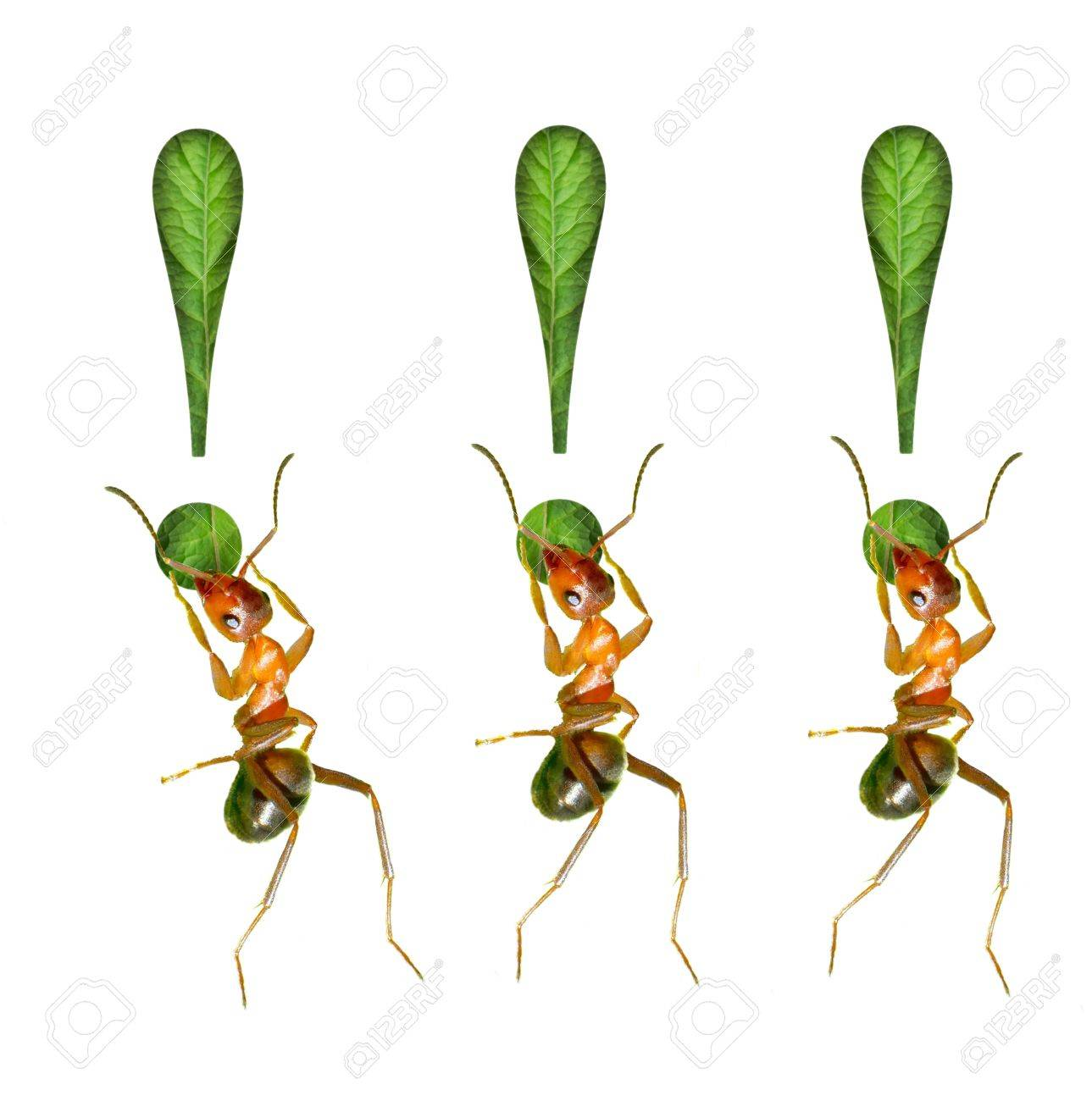 The ant and the exclamation mark Stock Photo - 16731973