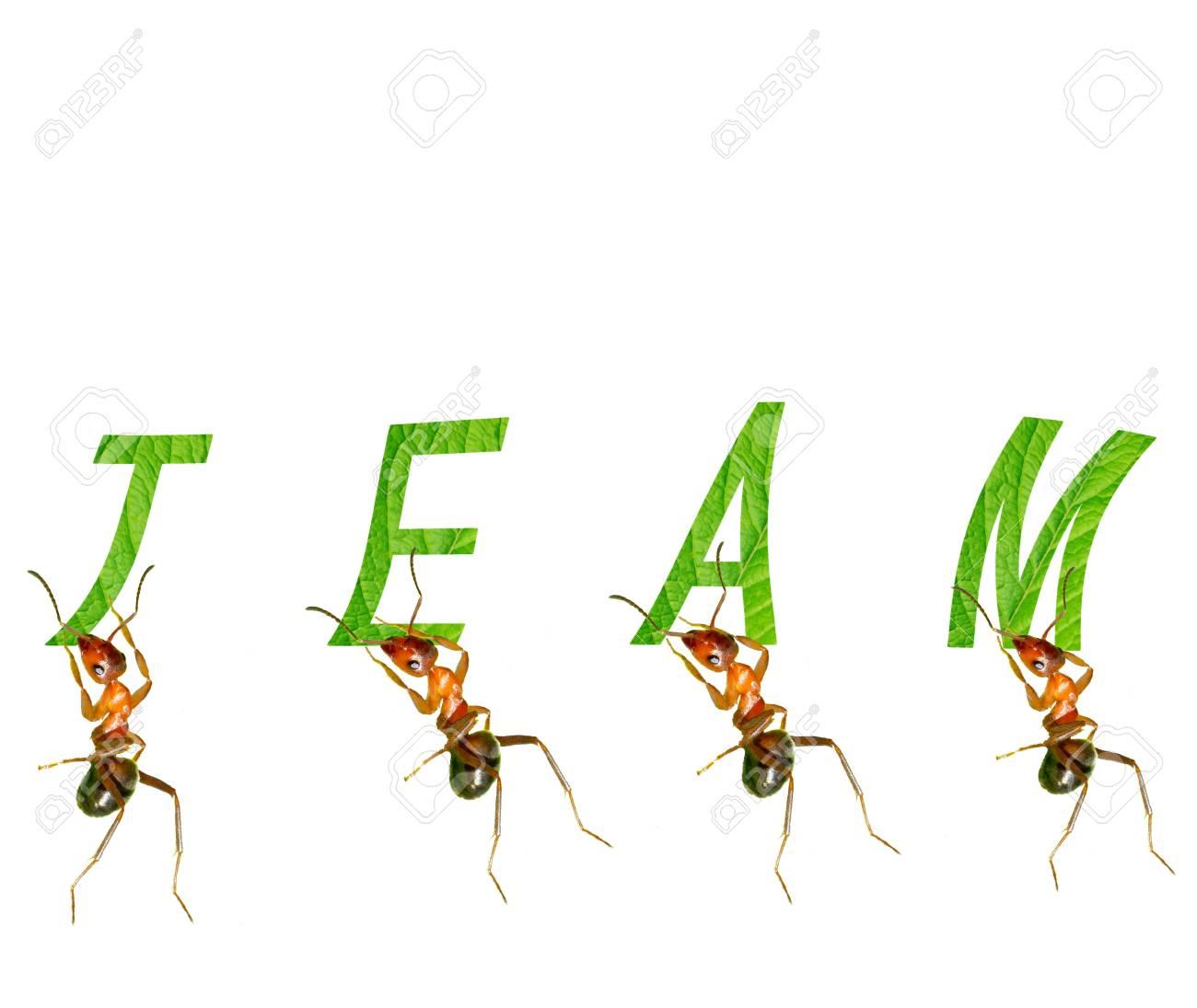 Ant tell us team of infinite power Stock Photo - 16731978