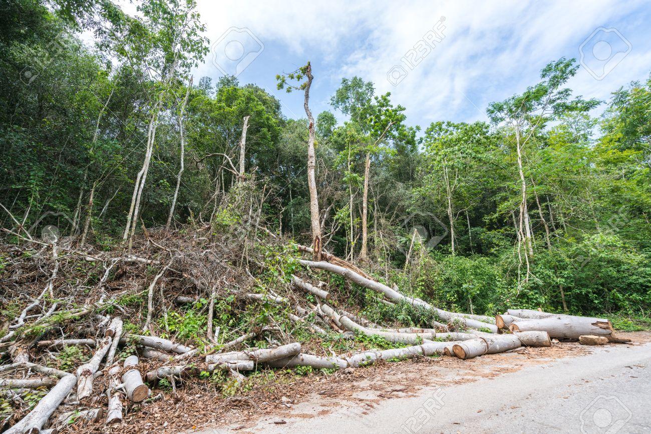 破壊 森林
