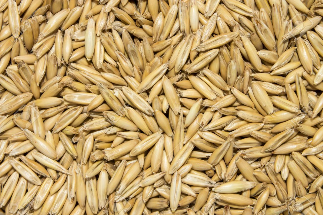 The Texture Of The Oats.Background Of Oat Seeds. Stock Photo, Picture And  Royalty Free Image. Image 99131046.