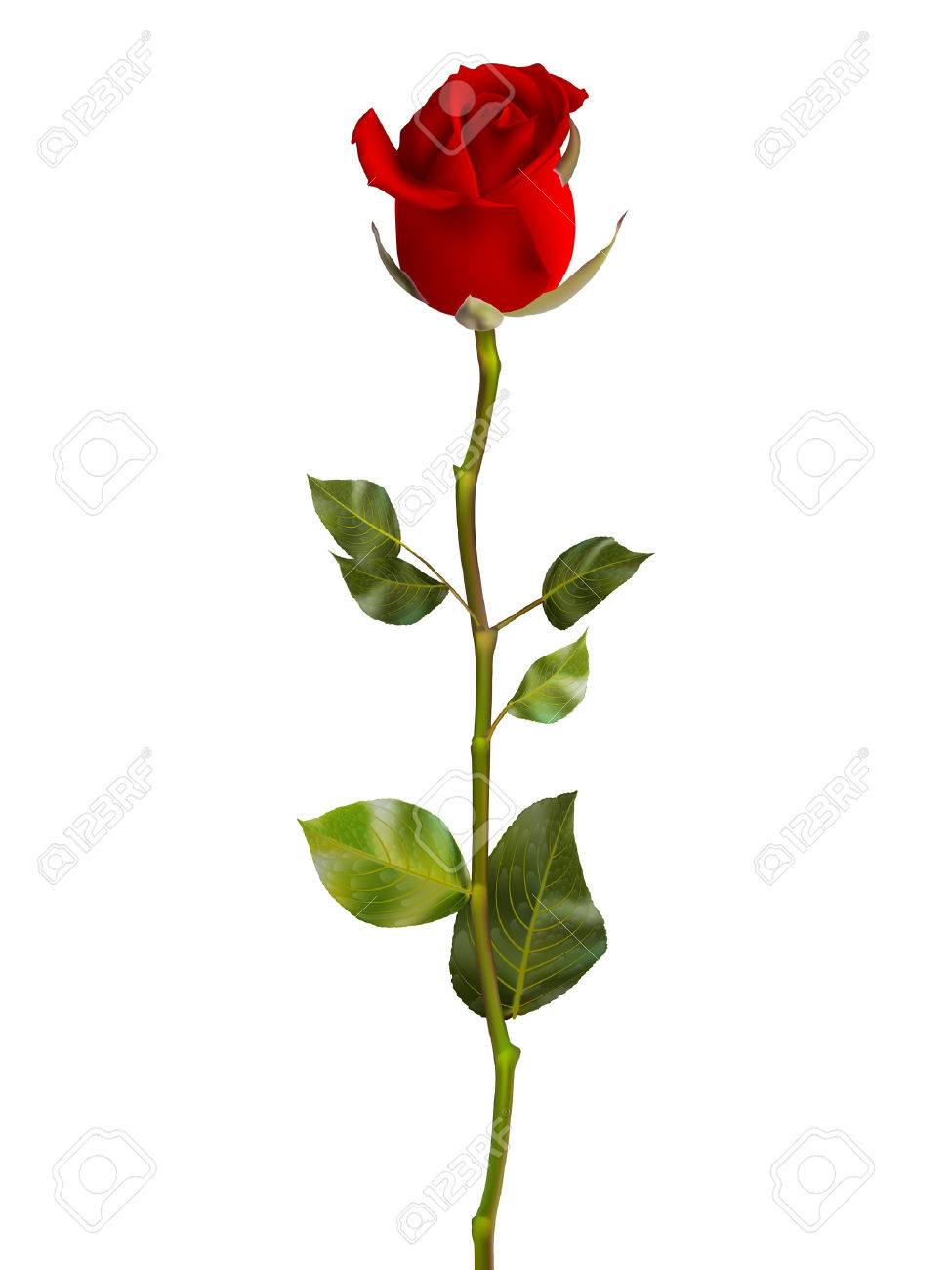 Valentines Day Sweet Red Roses. EPS 10 vector file included - 52420780