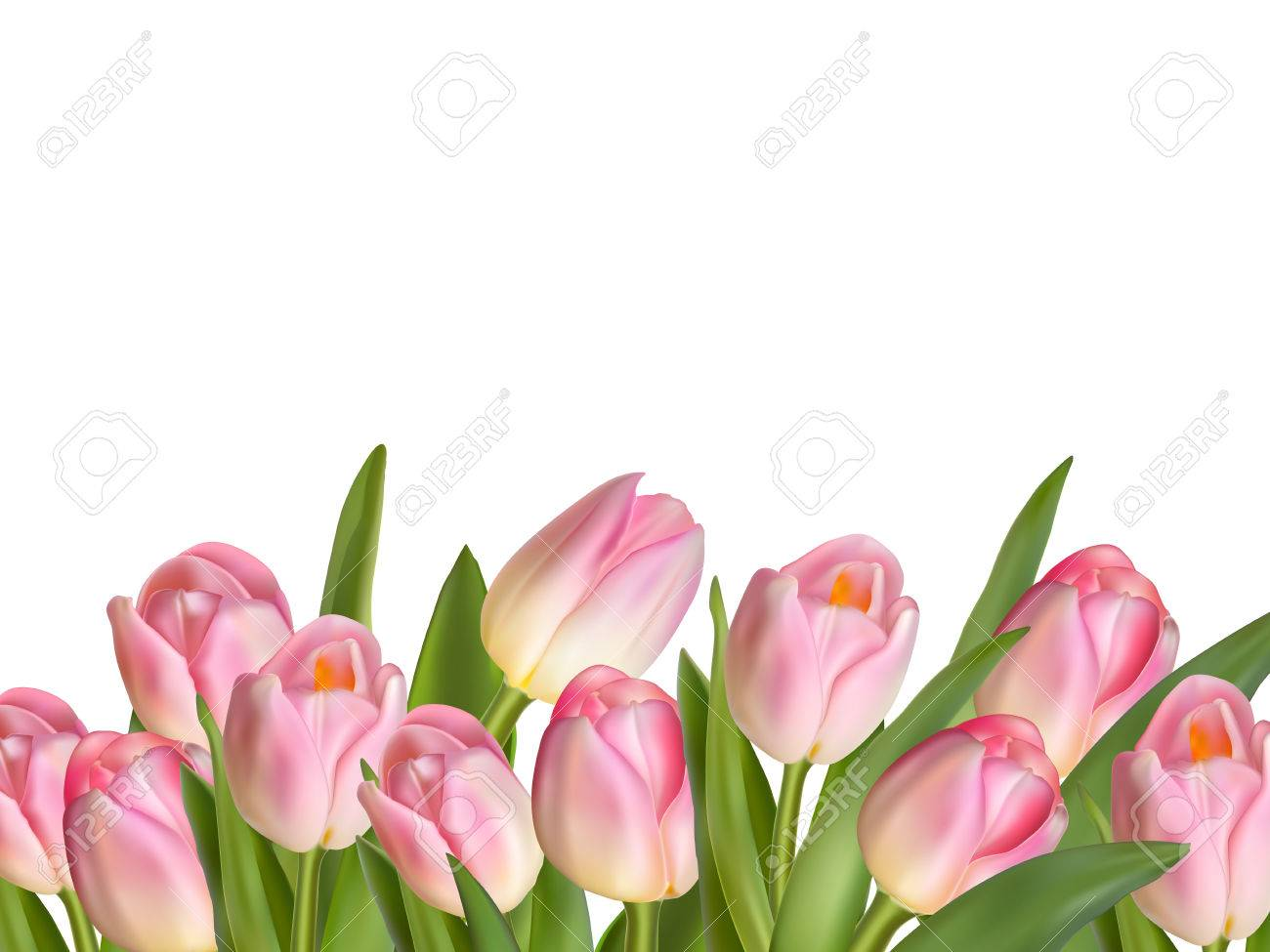 Beautiful realistic tulip bouquet. EPS 10 vector file included - 53240956