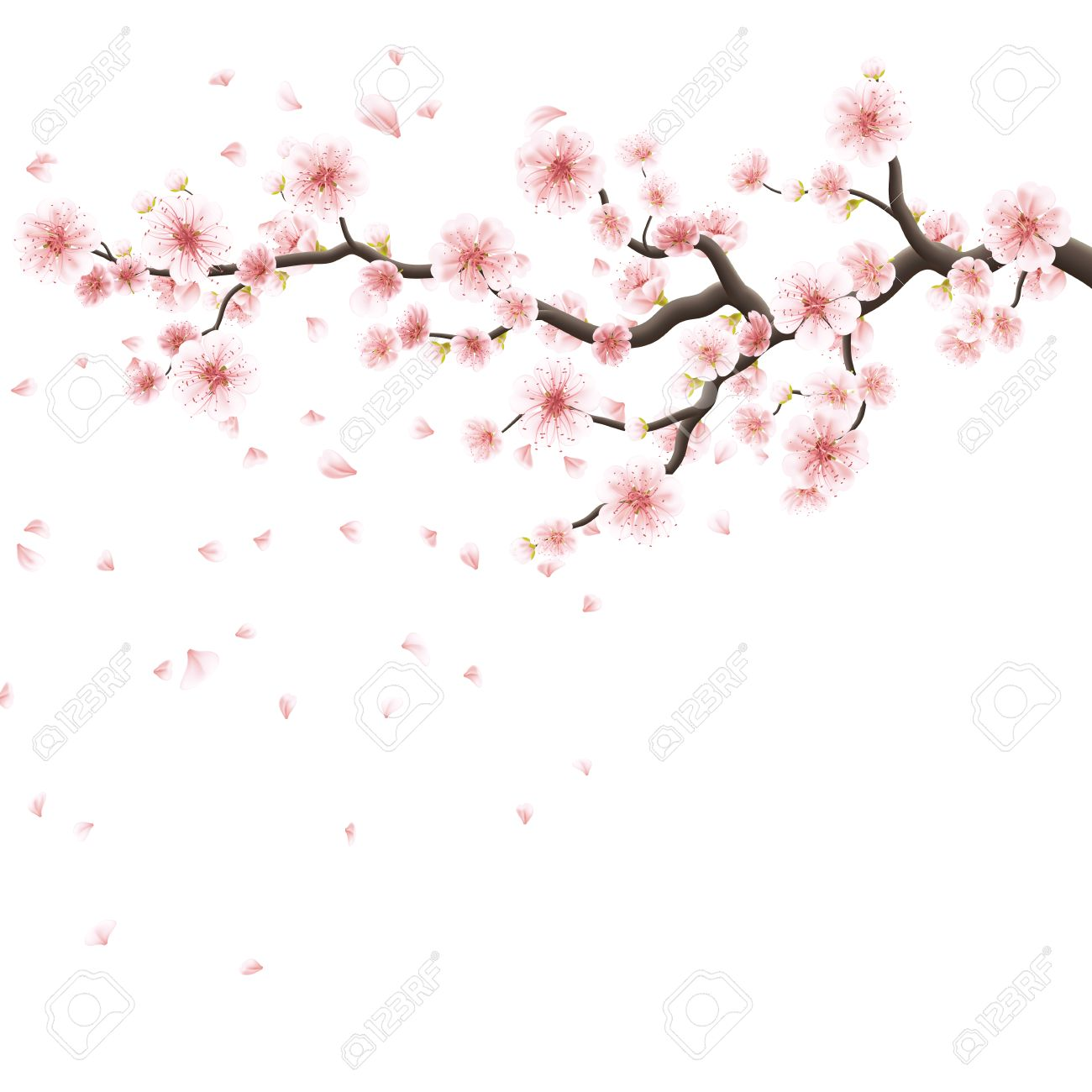 Nature Background With Blossom Branch Of Pink Sakura Flowers ...