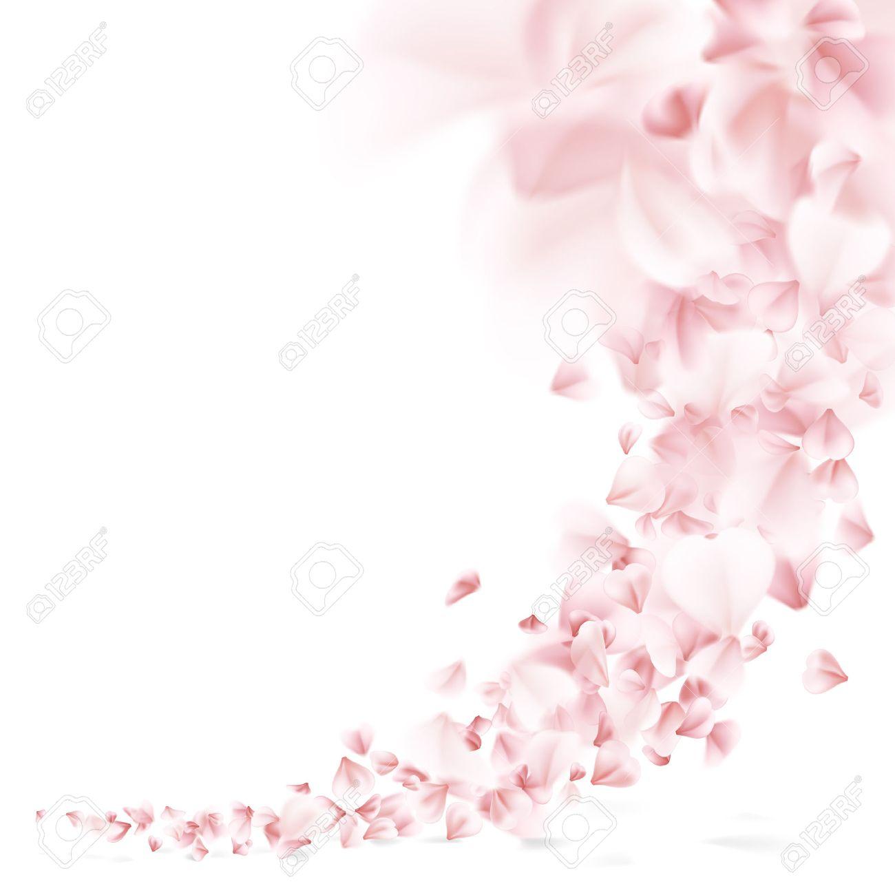 Sakura flying petals on white background. - 56755273