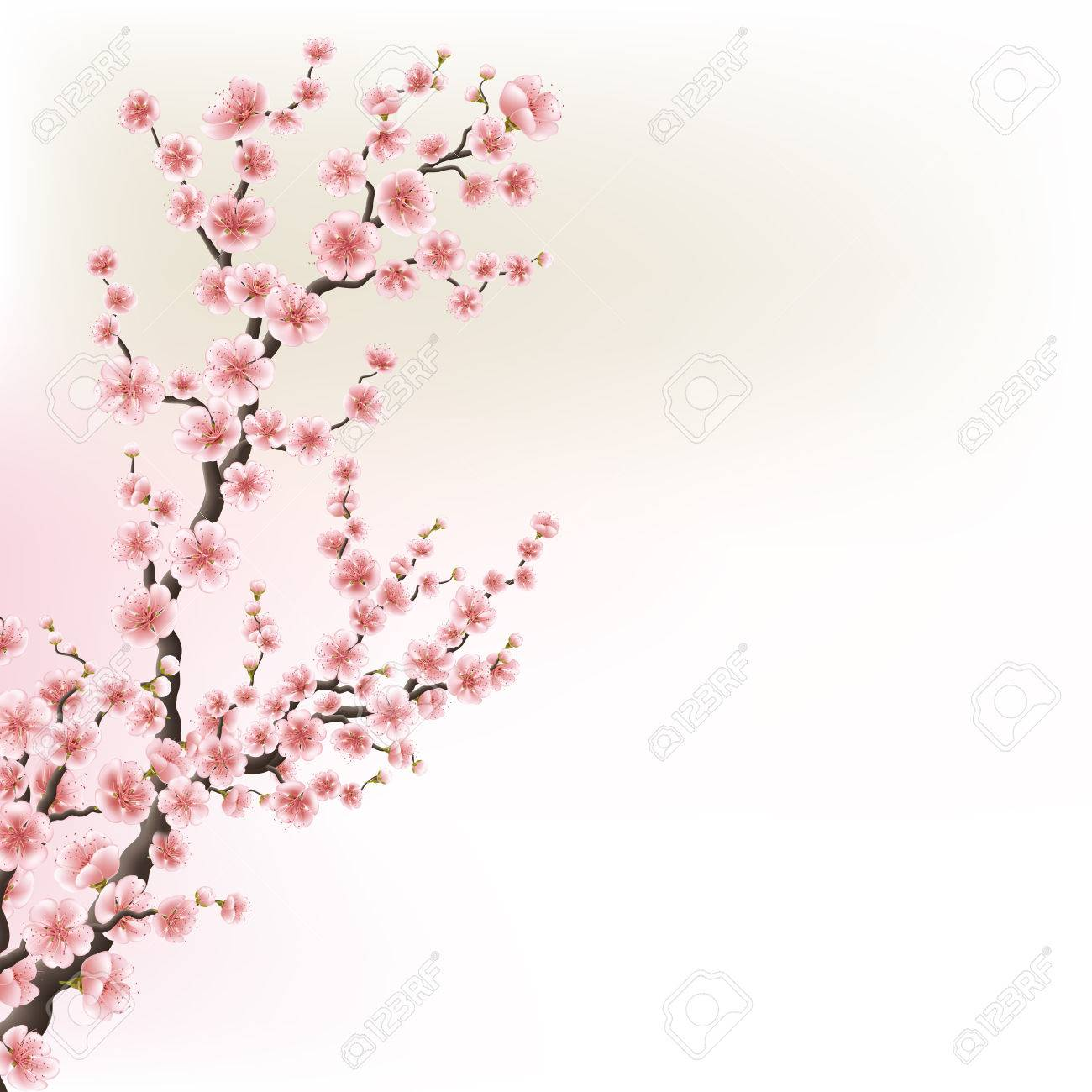 Blooming Cherry Blossom Branches card. EPS 10 - 69472979