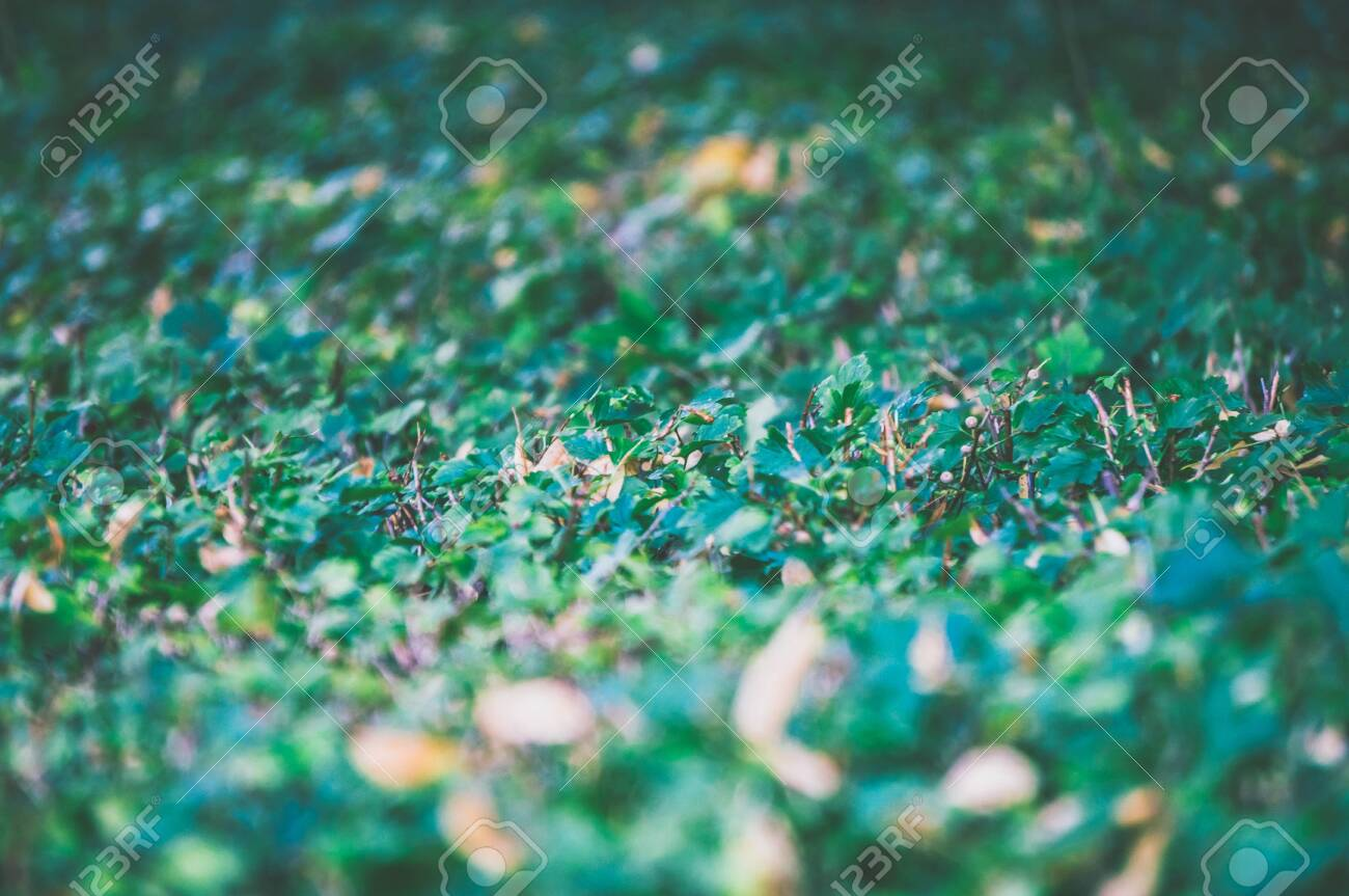 Selective focus natural seamless background of green leaves - 142801702