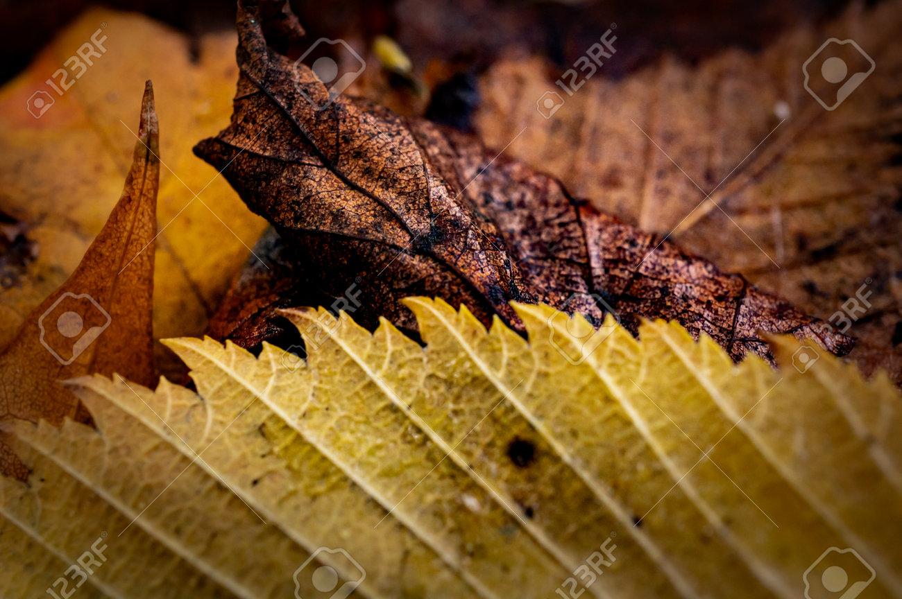 Macro image of autumn fallen leaves, yellow, brown and orange - 163421836