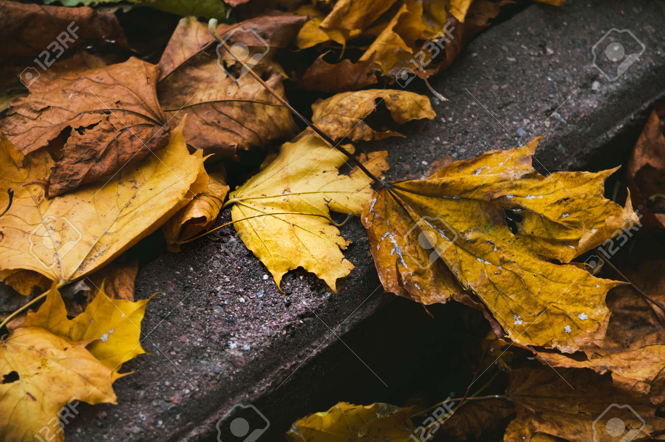 Closeup of autumn fallen leaves scattered on surface of asphalt road - 163422285