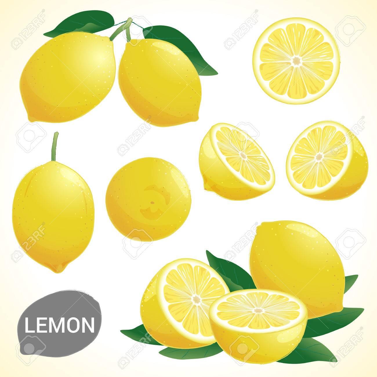 Set of fresh yellow lemon in various styles vector format - 44199704