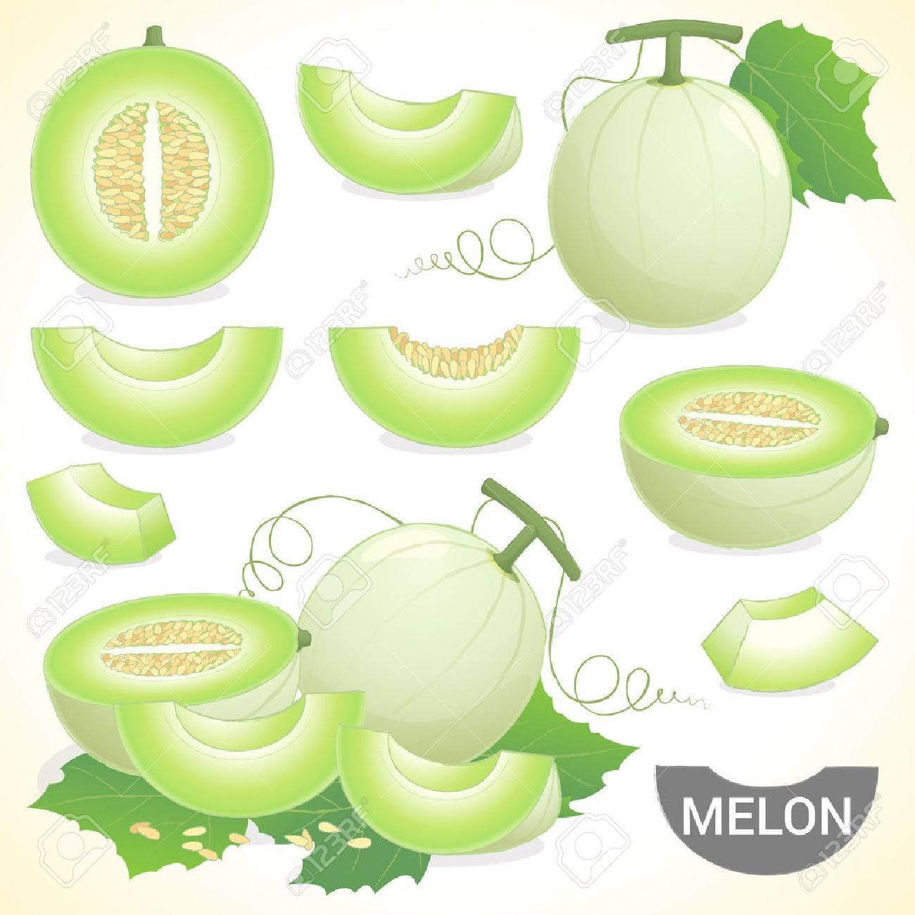 Set of cantaloupe honeydew honeymelon fruit in various styles vector format - 47180832