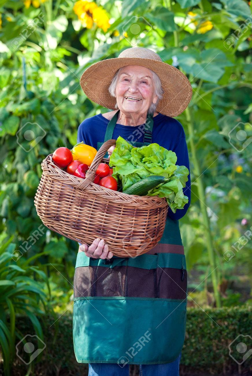 c2ab917f0ea4f Portrait of a Senior Woman in Gardening Outfit with Basket of Healthy Fresh  Vegetables at the