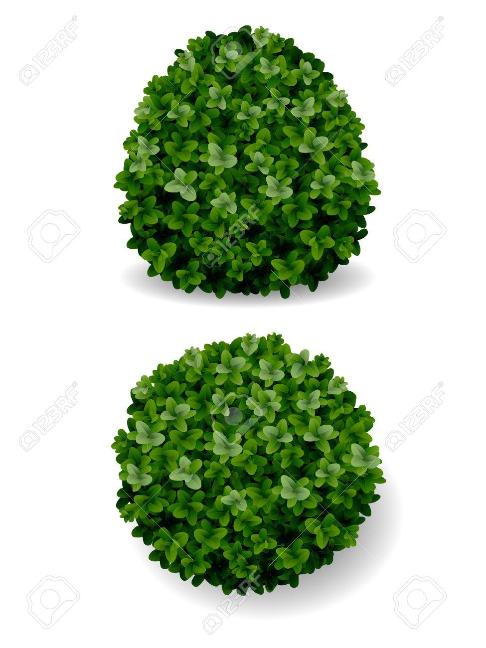 two round bush decorative plant boxwood Stock Vector - 34328630
