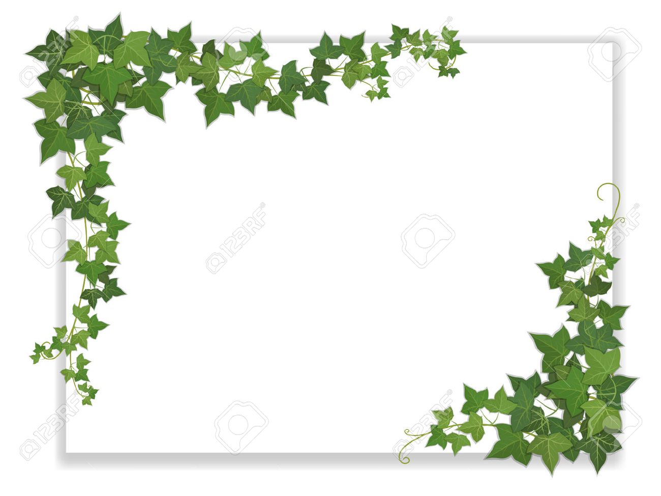 white paper sheet decorated hanging ivy Stock Vector - 36749738