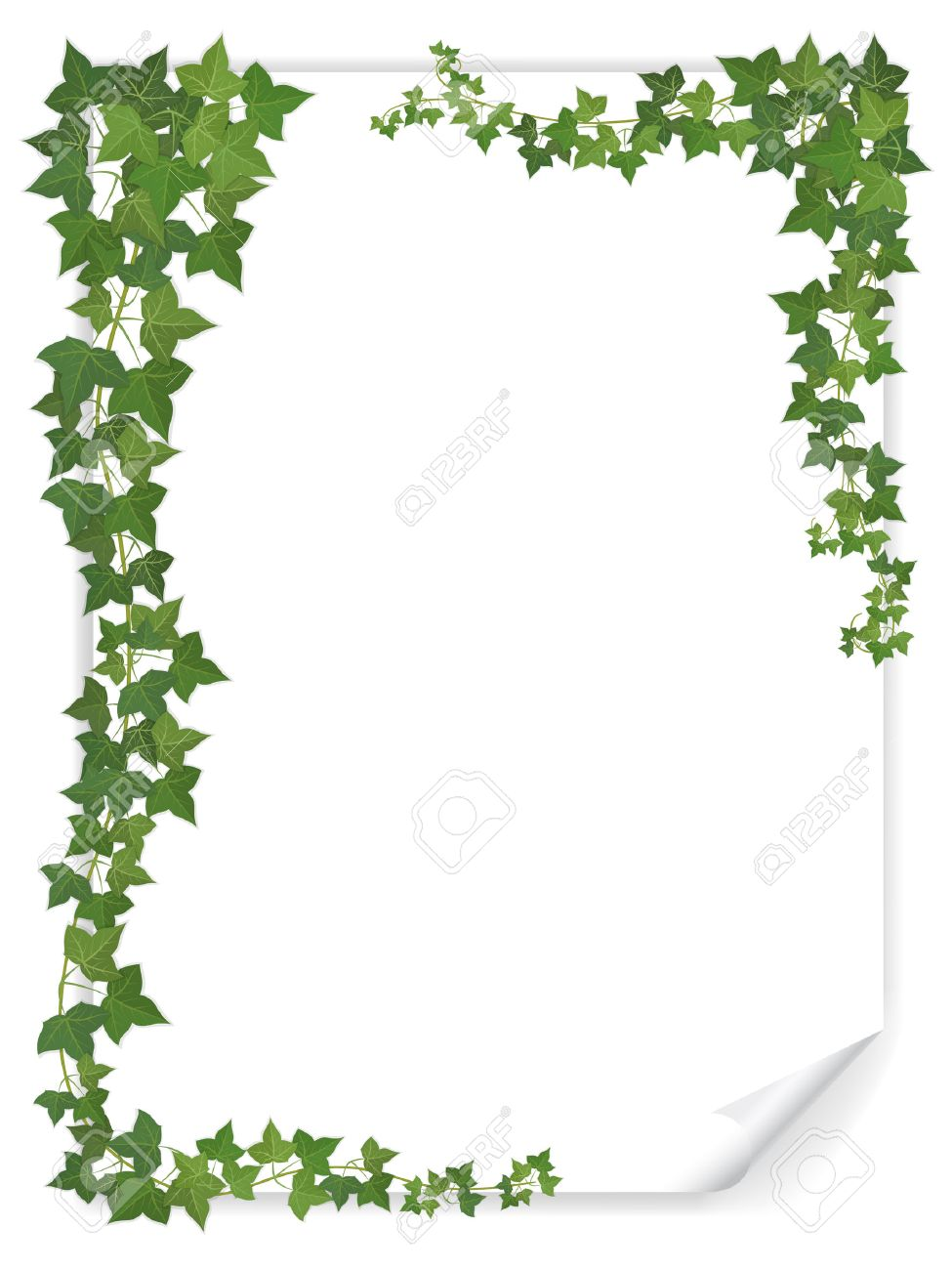 white empty paper sheet decorated branches of ivy Stock Vector - 36899226