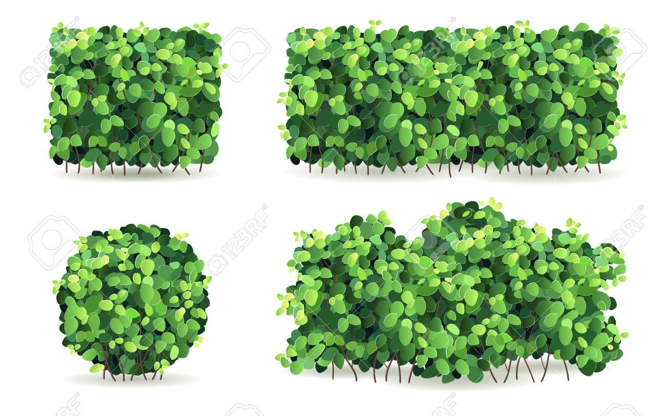 Set of bushes of different shapes on a white background isolated, stylized vector illustration. Stock Vector - 41071576