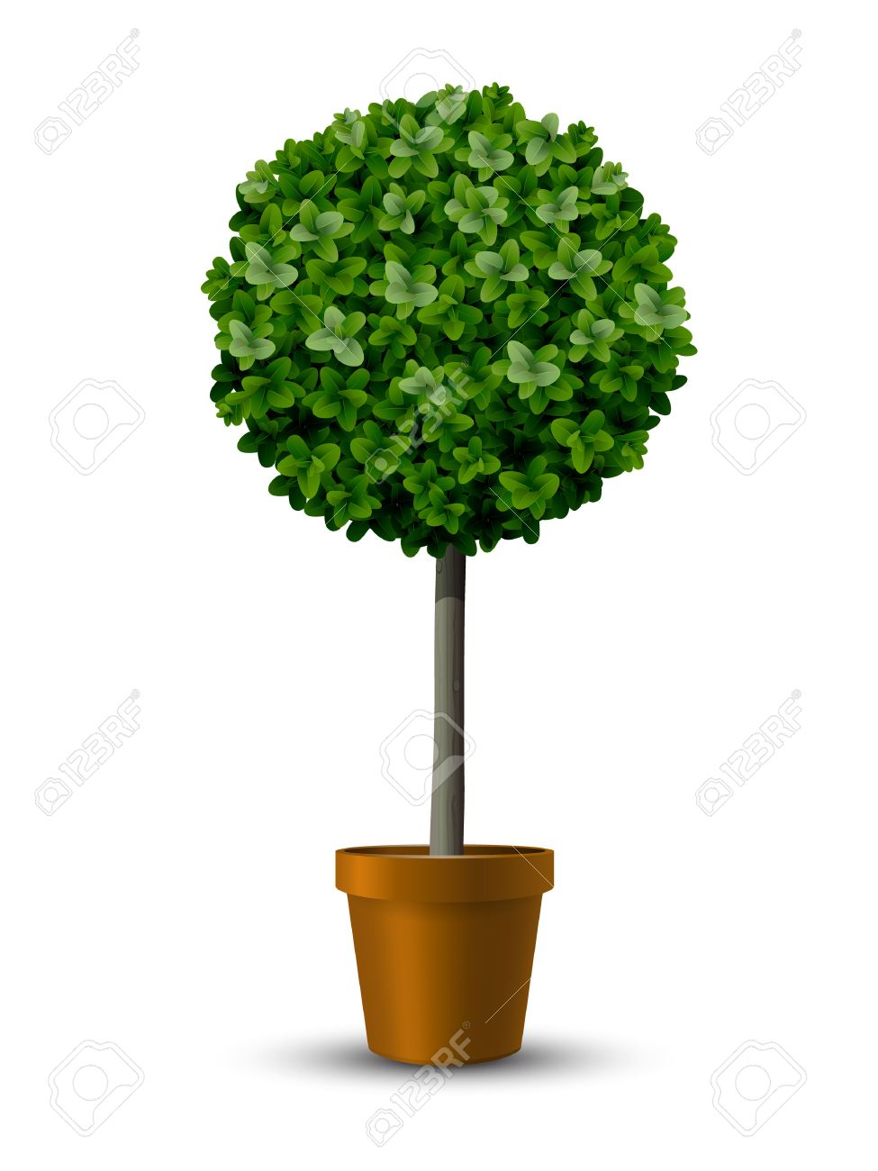 Decorative trimming boxwood tree in flowerpot. Stock Vector - 41624947