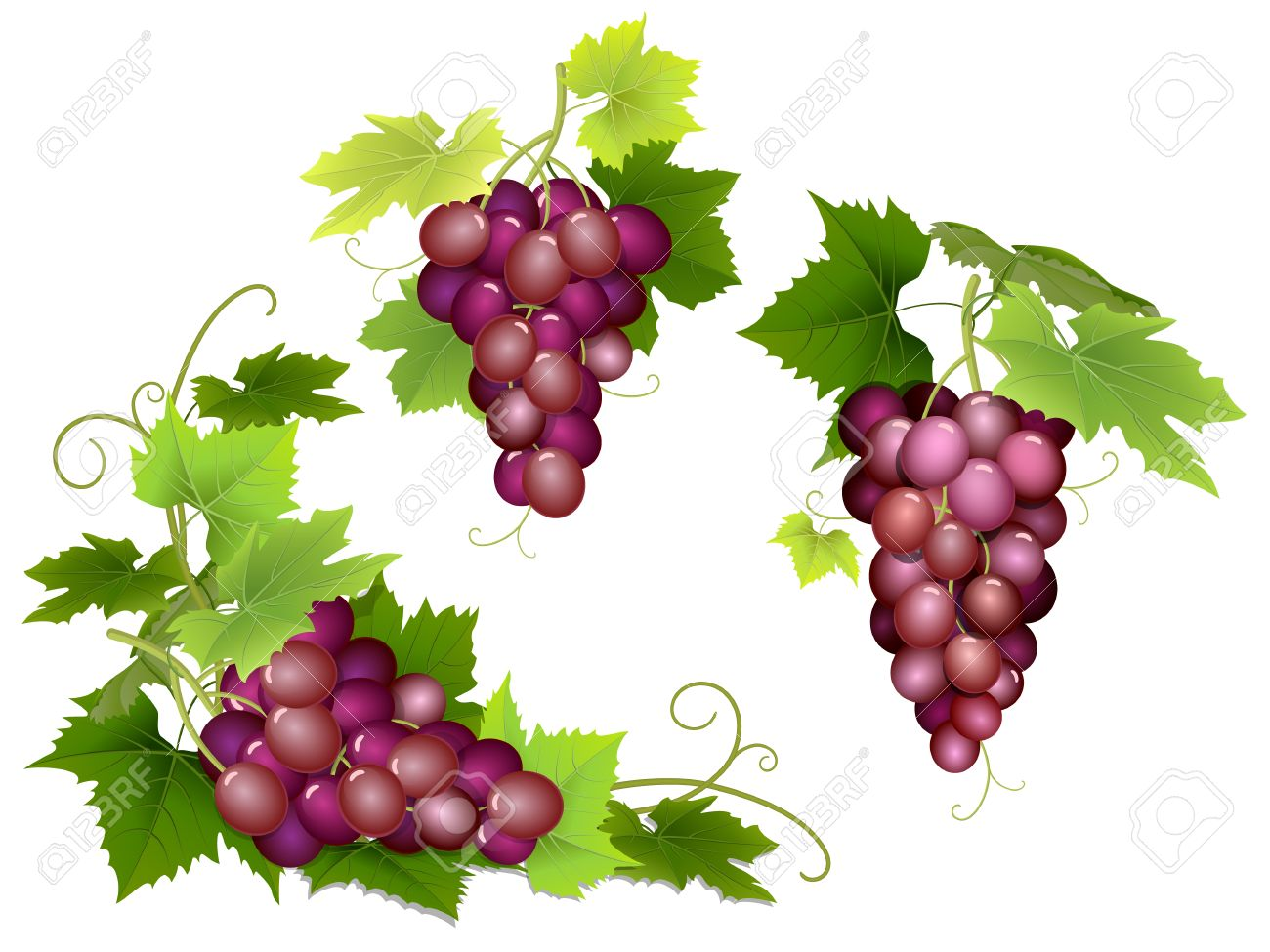 Set of pink bunches of grapes with green leaves. Stock Vector - 43792462