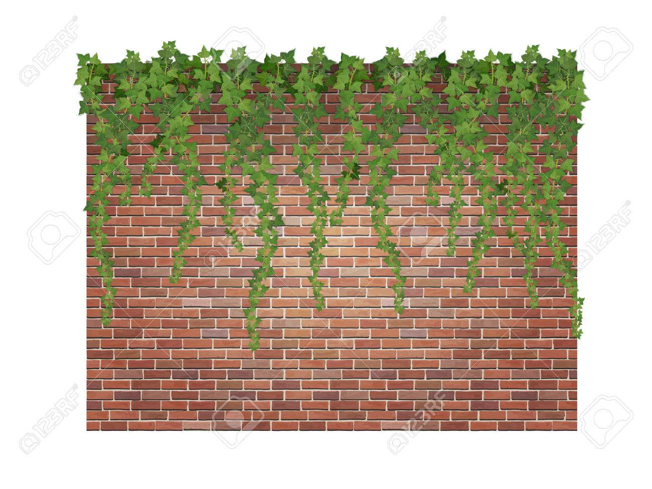 Hanging down ivy shoots on the brick wall background. Stock Vector - 44238432