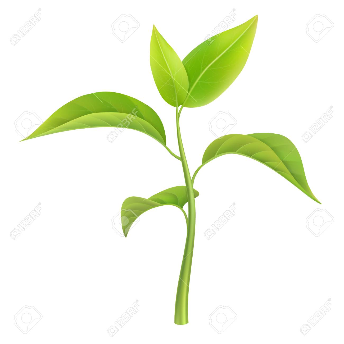green sprout small branch young plant vector illustration rh 123rf com plant vector free plant vector protection
