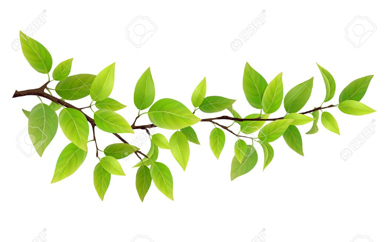 Small tree branch with green leaves. Detailed plant, isolated on white background. Stock Vector - 60186637